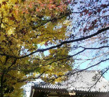 もみじ・いちょうナメ お寺のお堂の屋根