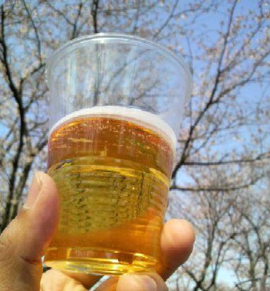 桜のもと乾杯